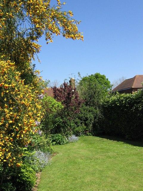 Rear garden in Brimmers Hill