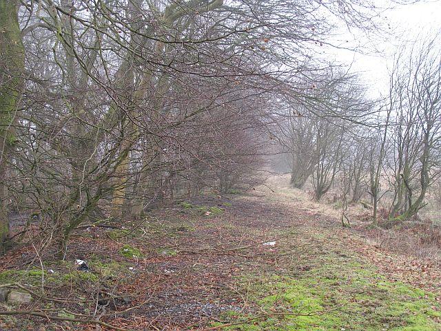 Woodland track, Aberdona