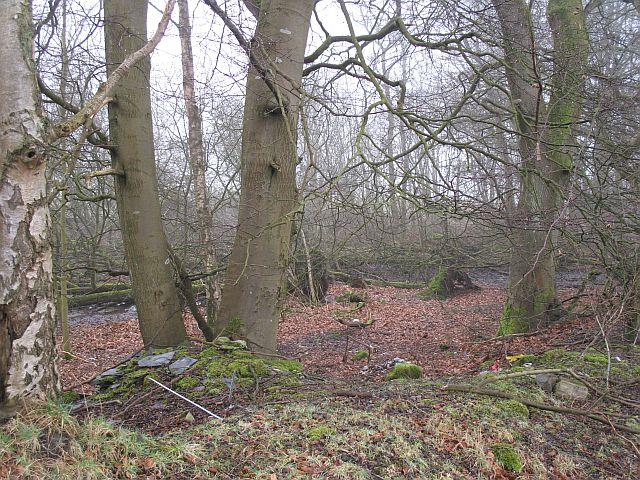 Wet woodland