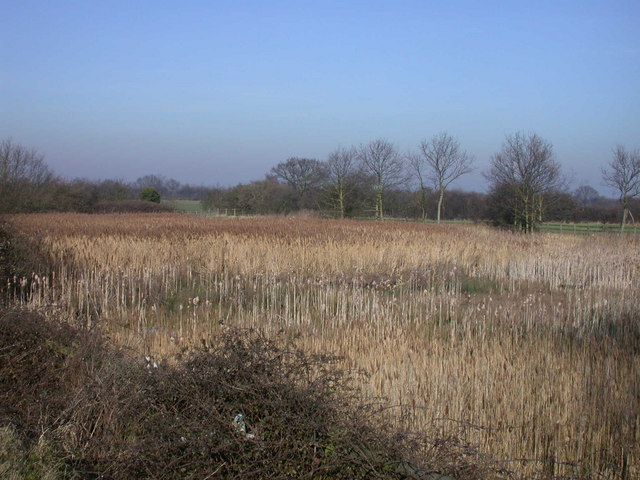 Reed beds beside the A14
