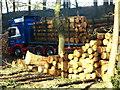 TL1240 : Logging Operation 2 by Dennis simpson