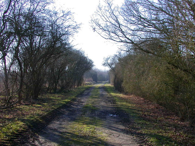 Bridleway to Madingley