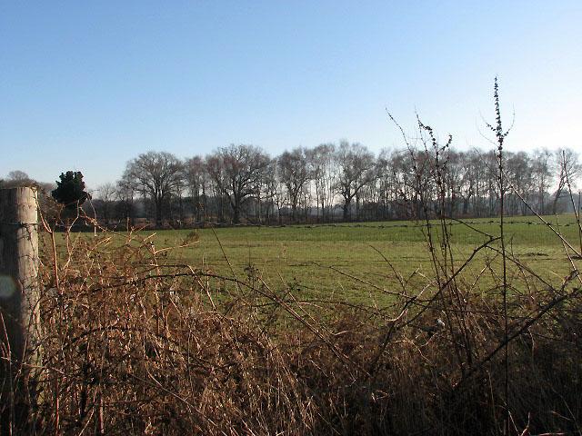 Field beside Honeycombe Road