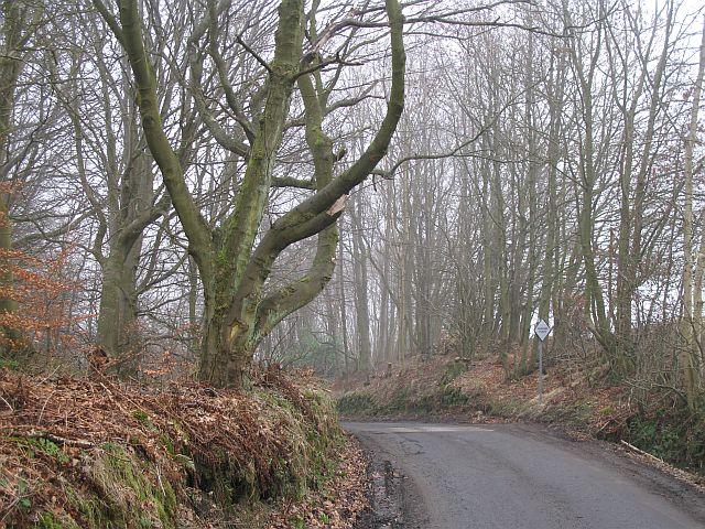 Sheardale Woods