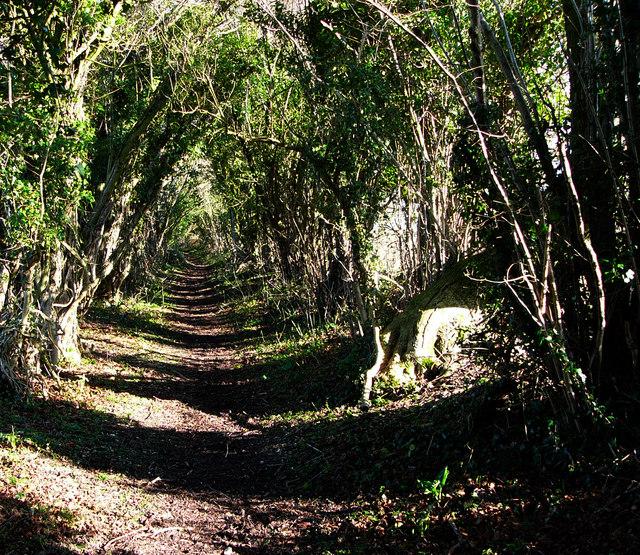 Footpath near North Marden