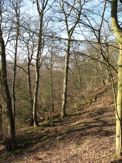 Wooded valley side near Laund House