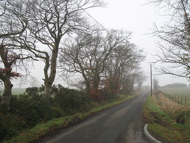 Oak lined road, Tethyknowe