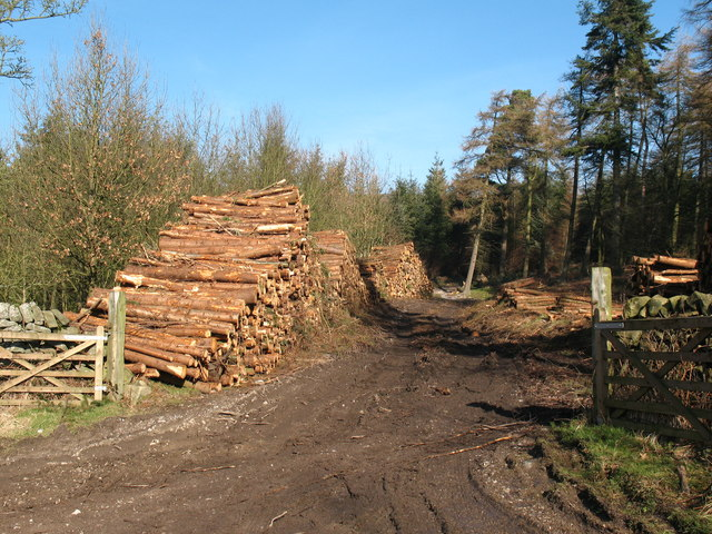 Timber operations