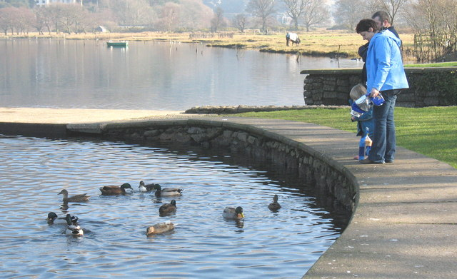 Bwydo'r chwyad. Feeding the ducks.