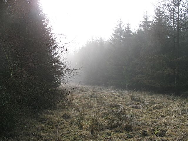Din Moss
