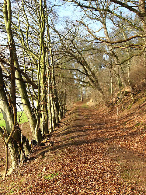 A path at the edge of Easter Wood