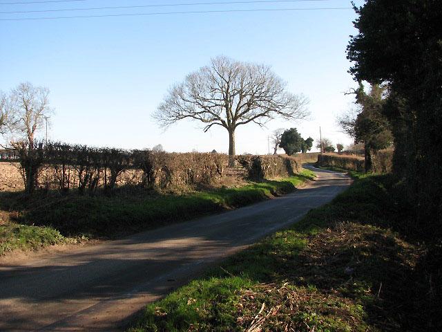 Toad Lane