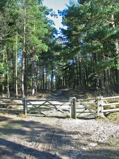 Gateway to Hasley Inclosure New Forest Hampshire