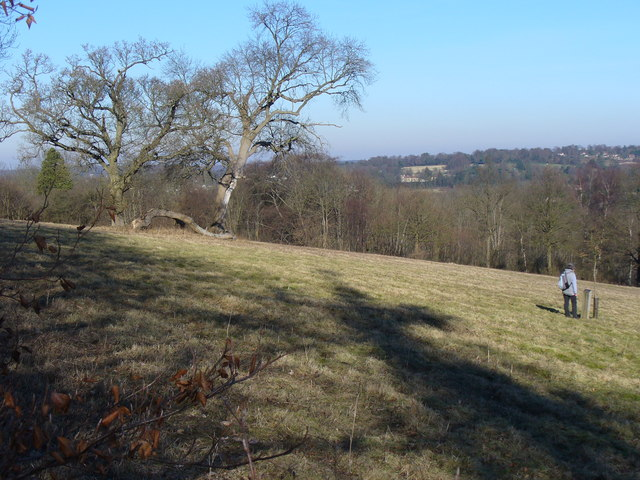 Downland in Norbury Park