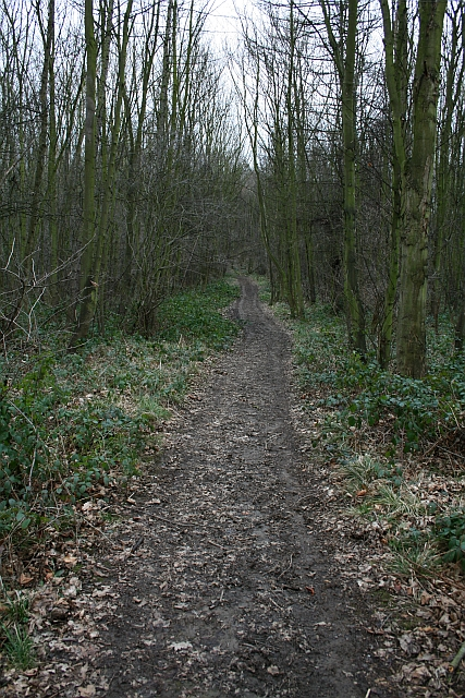 Track in Stubbs Wood