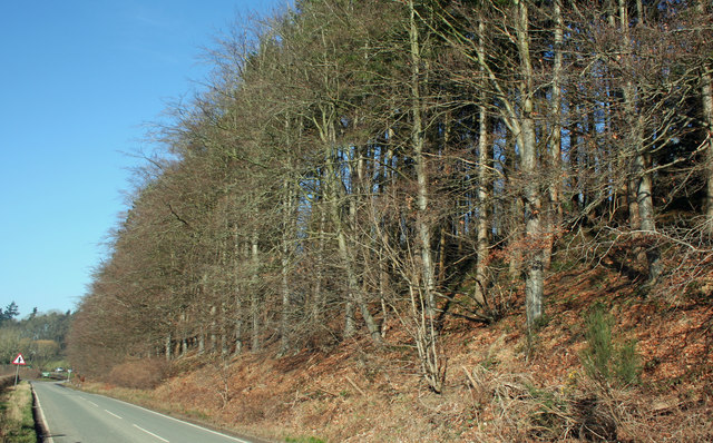 Wooded Slope