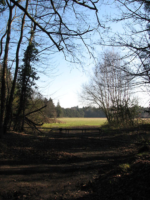 View towards Racecourse Plantation