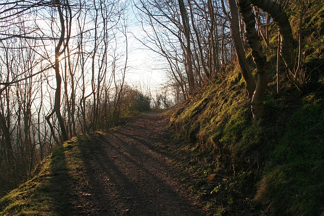 Anticipation - Path from Berrington's Quarry