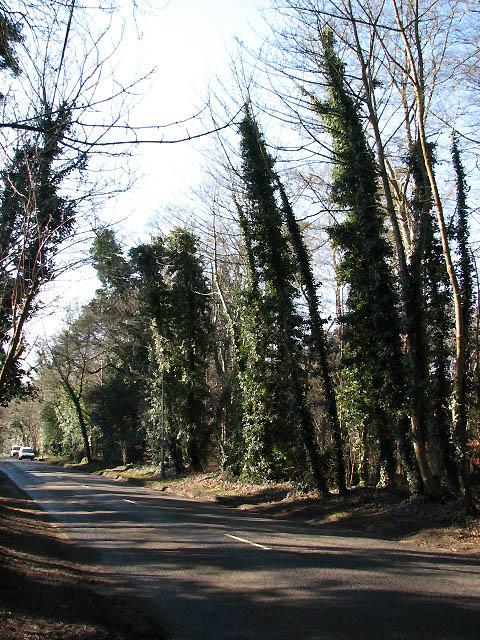 Salhouse Road through Harrison's Plantation