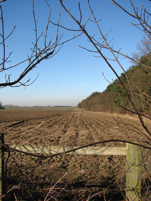 Ploughed field adjacent to Bulmer Coppice