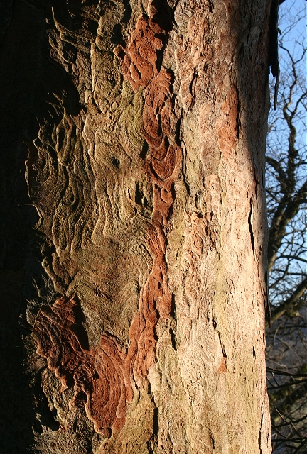 Bark Marks