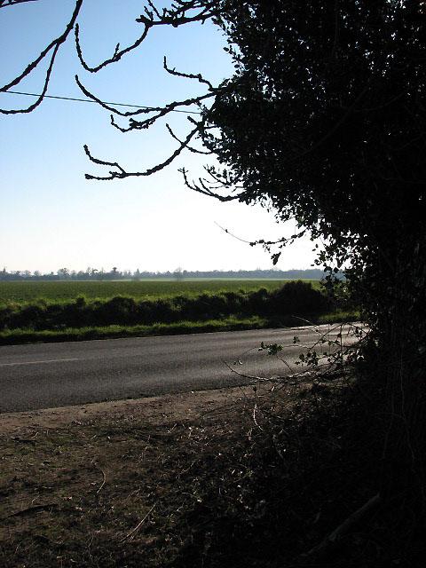 View across Salhouse Road
