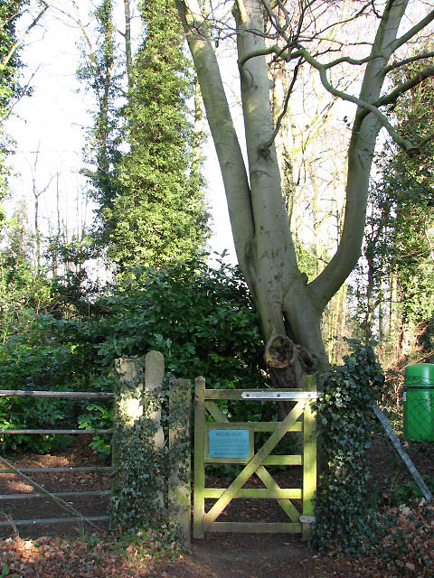 Key's Hill Wood