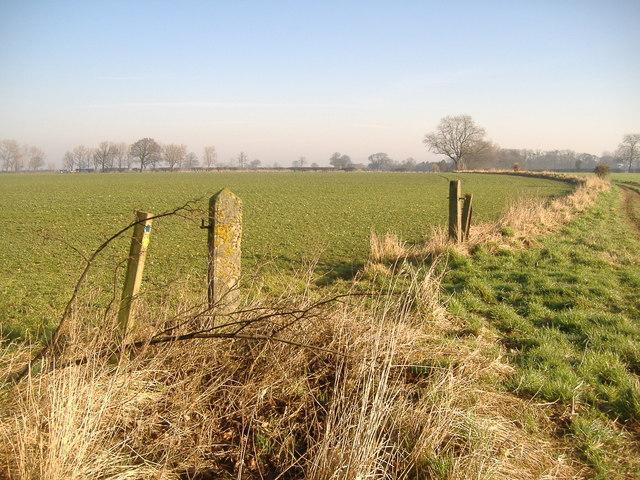 Waymarker Post Between Crop Fields