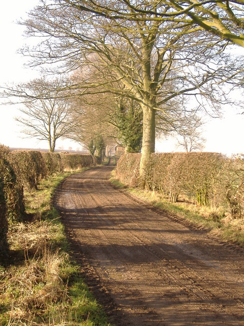 Bare Trees & Hedges But A Beautiful Morning