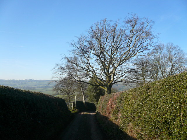 Slack Lane - High Hedges and Footpath