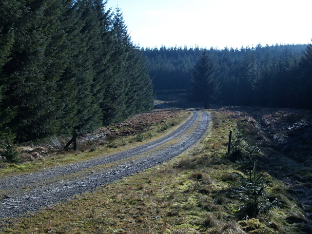 Forest road, Howcleugh Forest