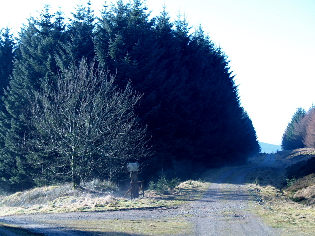 Track junction, Howcleuch Forest