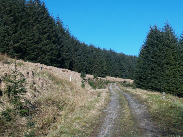 Forestry road, Errickstane Hill