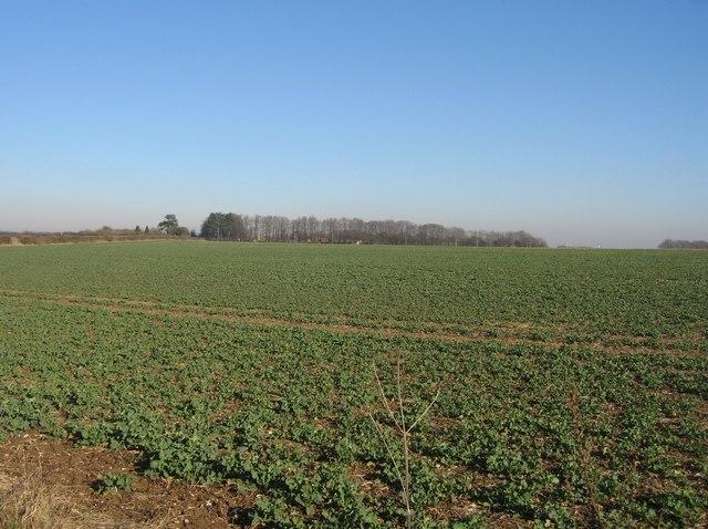 Farmland on the edge of Basingstoke