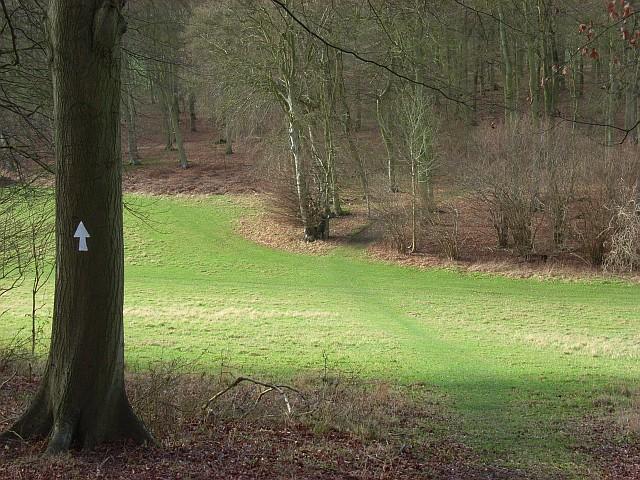 Gap between woodland, Ibstone
