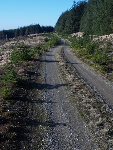 Forestry road, Errickstane Hill