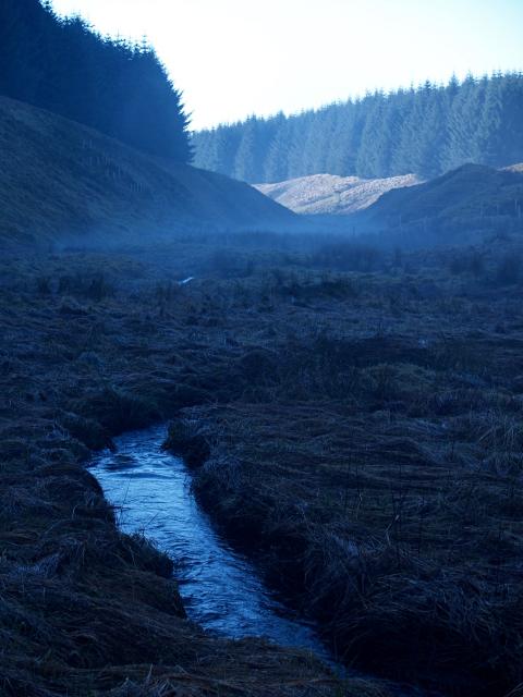 Back Burn, Upper Howcleuch Forest