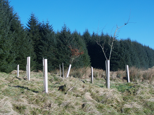 Ecological diversity, Howcleuch Forest