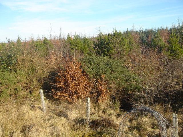 Woodland at Shebster