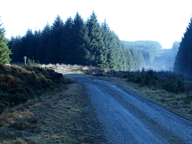 Forestry road, Howcleuch Forest