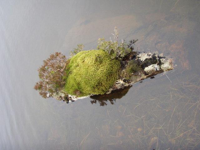 Mossy rock in lochan