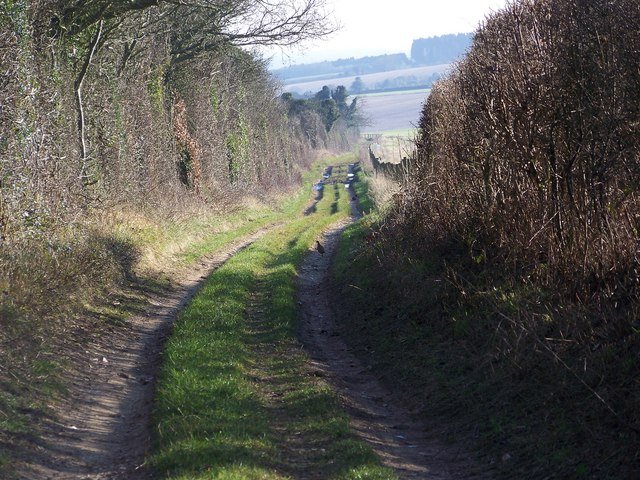 Byway across Whitsbury Down