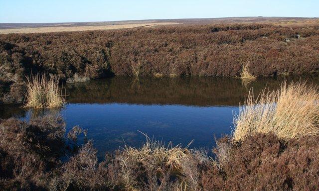 Pond, Hamer Moor