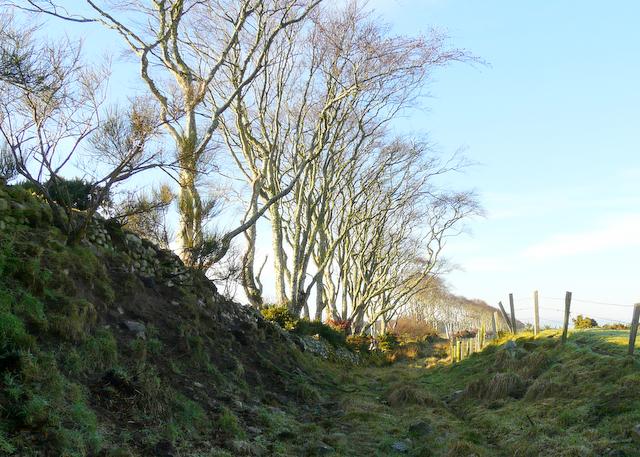 Old track near Rockfield, Tarbat