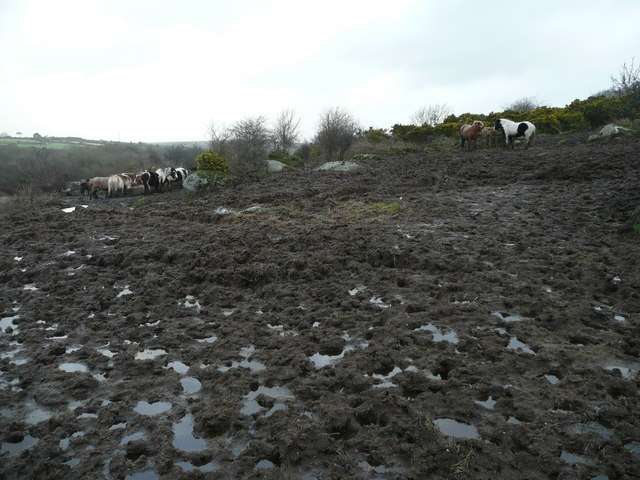 Ponies in a mud bath
