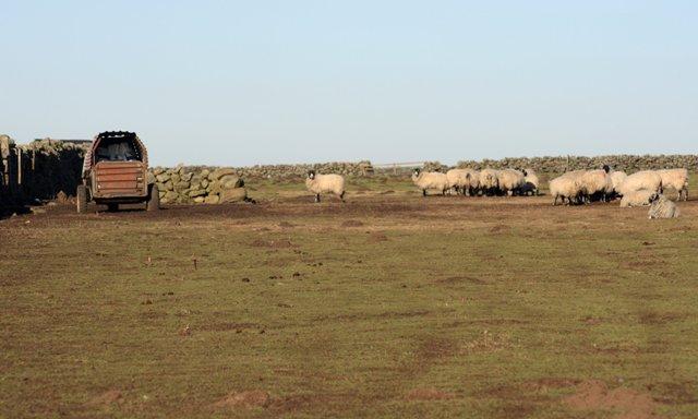 Pasture Fields, Hamer Moor