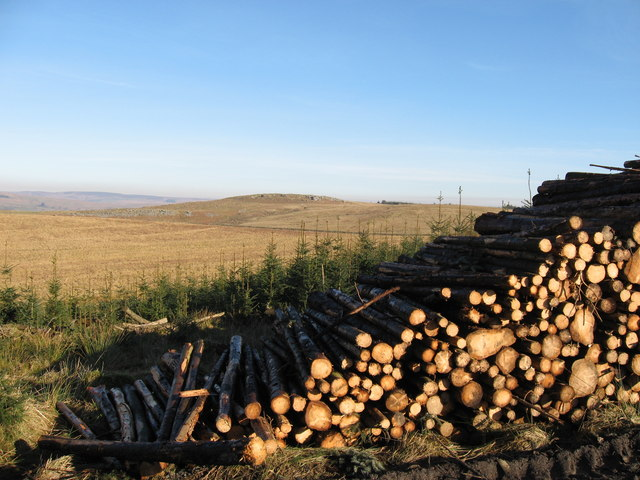 Timber stack near Ridley Stokoe