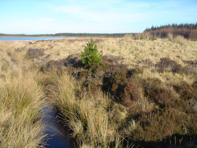 Loch Thormaid feeder burn