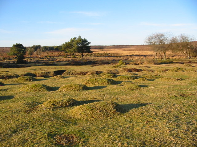 Hummocks near Latchmore Brook New Forest Hampshire