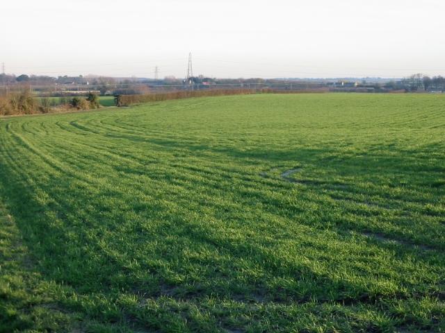 View across the fields from Church Street, Woodnesborough